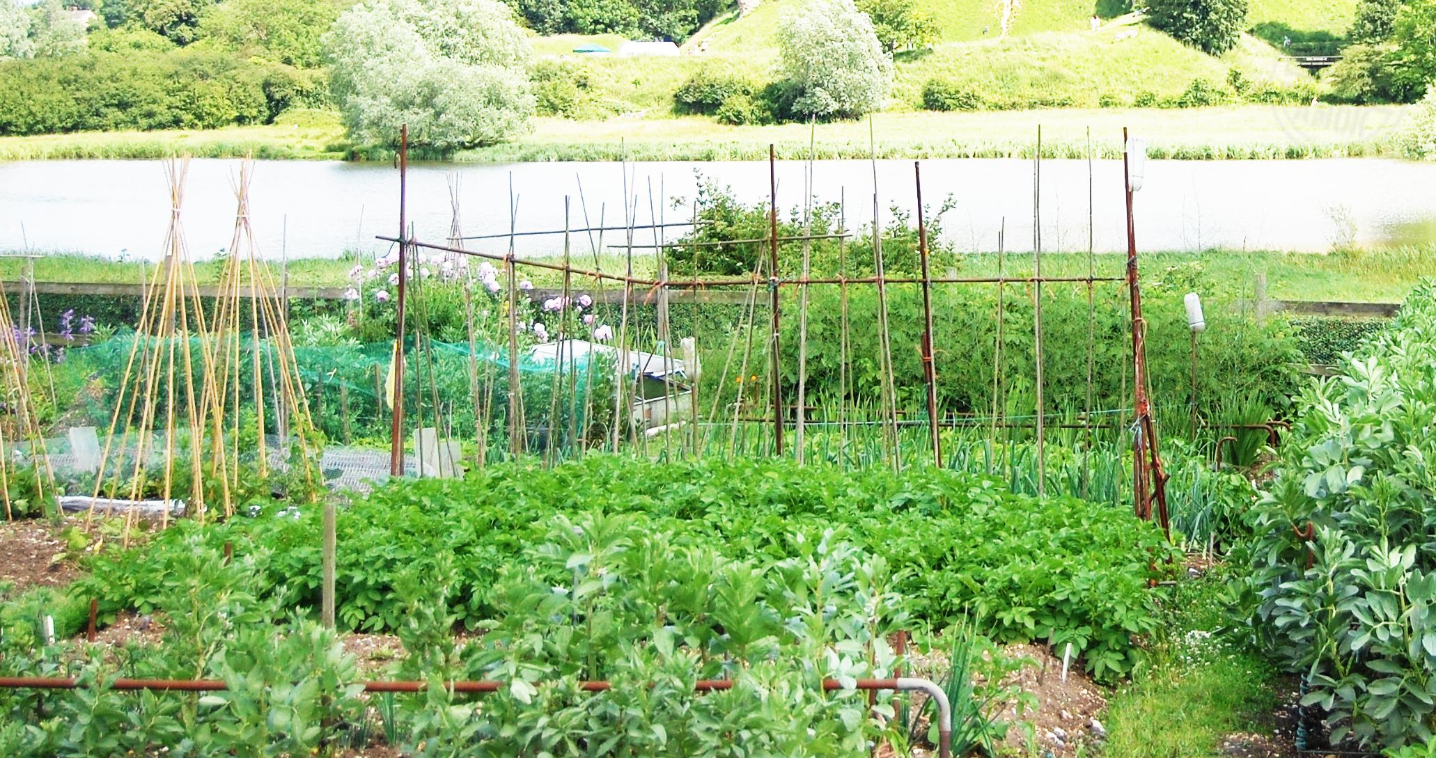 Gartenparzelle, Schrebergarten