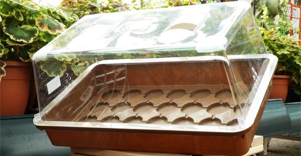 Aussaat und Frühbeet - Anzuchtkasten für Jiffys und andere Torfquelltöpfe