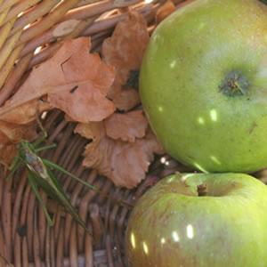 Heuschrecke bei der Apfelernte