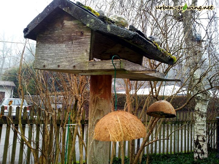 Meisen-Kokoshänger - www.urban-growing.net