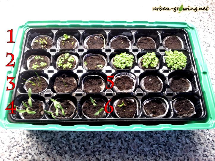 Aussaat und Anpflanzen im Minigewächshaus - www.urban-growing.net