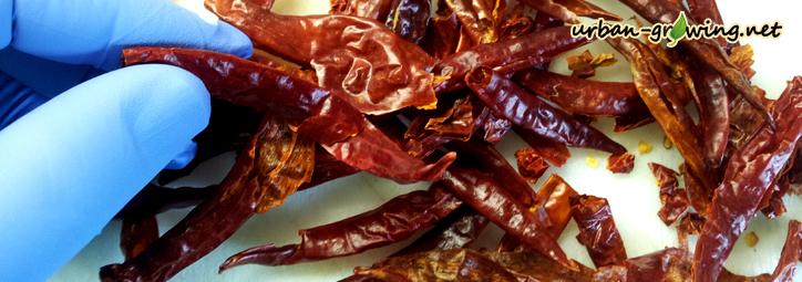 Für Chili-Liebhaber. Bekannter Maßen gibt es eine kaum überschaubare Vielfalt an Chilisorten. Daher liegt es nahe, sich seinen eigenen Chili zu züchten.