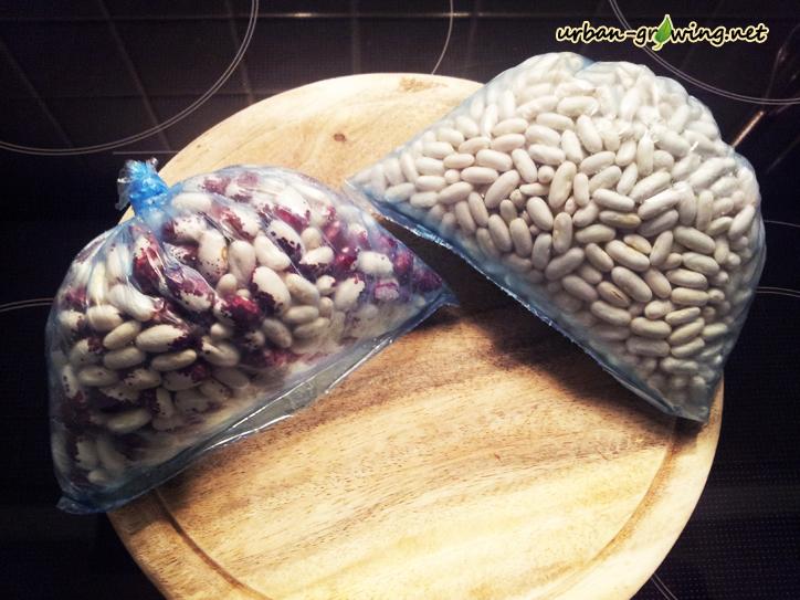 Die sortierten Bohnen werden portionsweise in Gefrierbeutel abgefüllt und eingefroren
