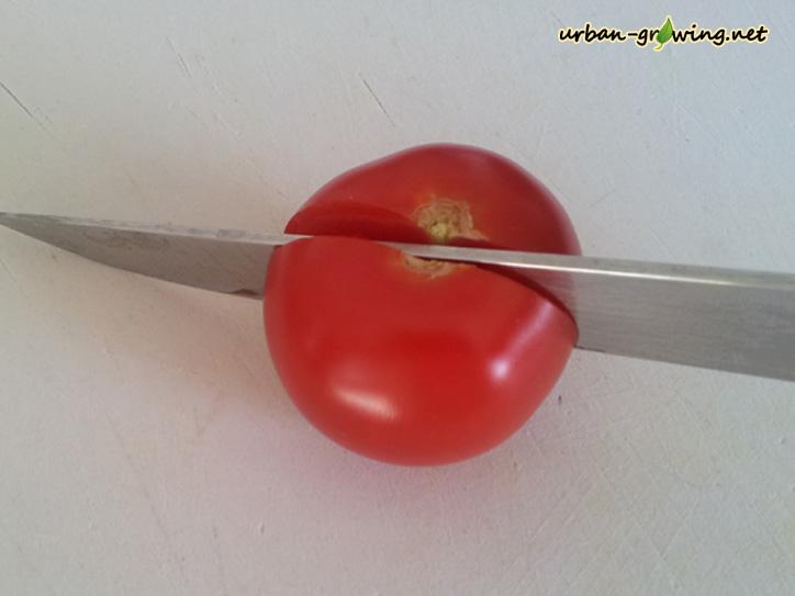 Tomatensamen gewinnen - www.urban-growing.net