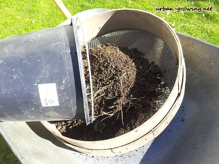 Hochbeet bepflanzen - www.urban-growing.net