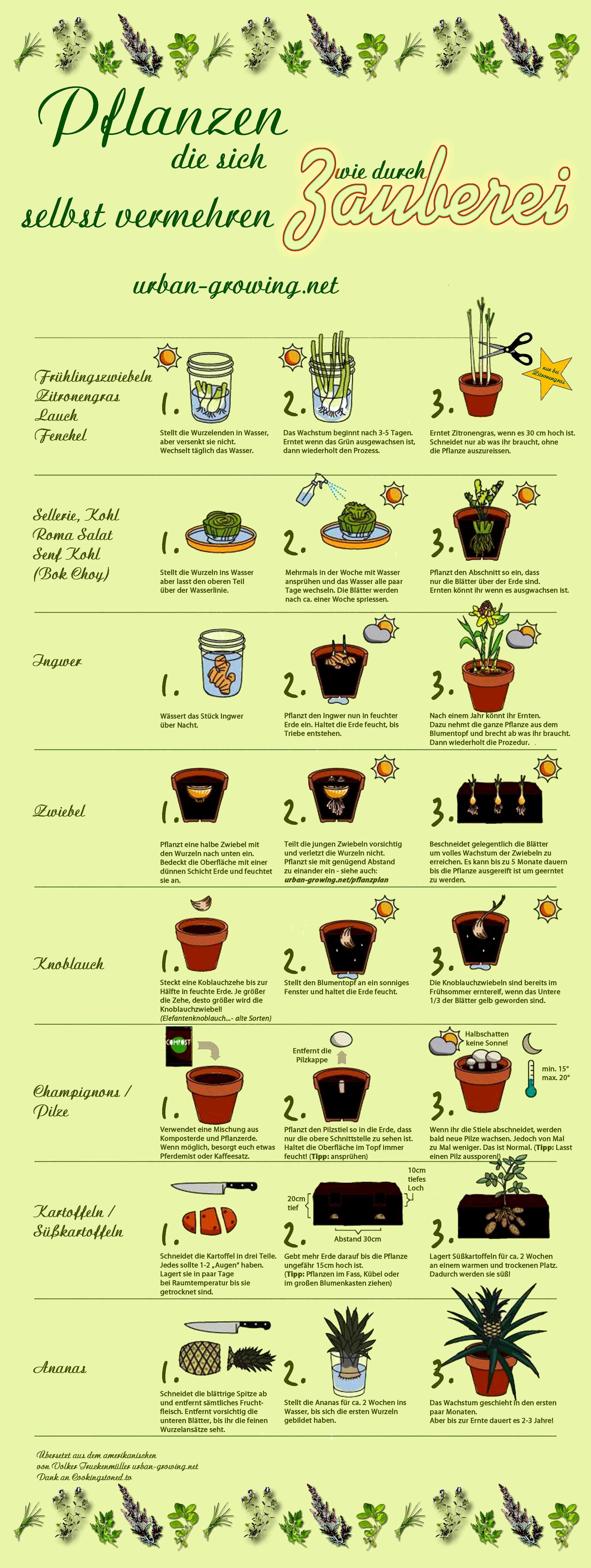 champignon rezepte mit ei
