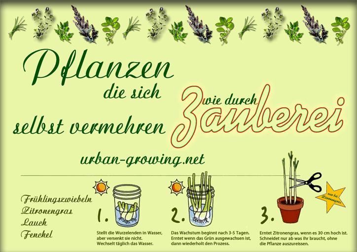 Pflanzenvermehrung - Zauberpflanzen - www.urban-growing.net