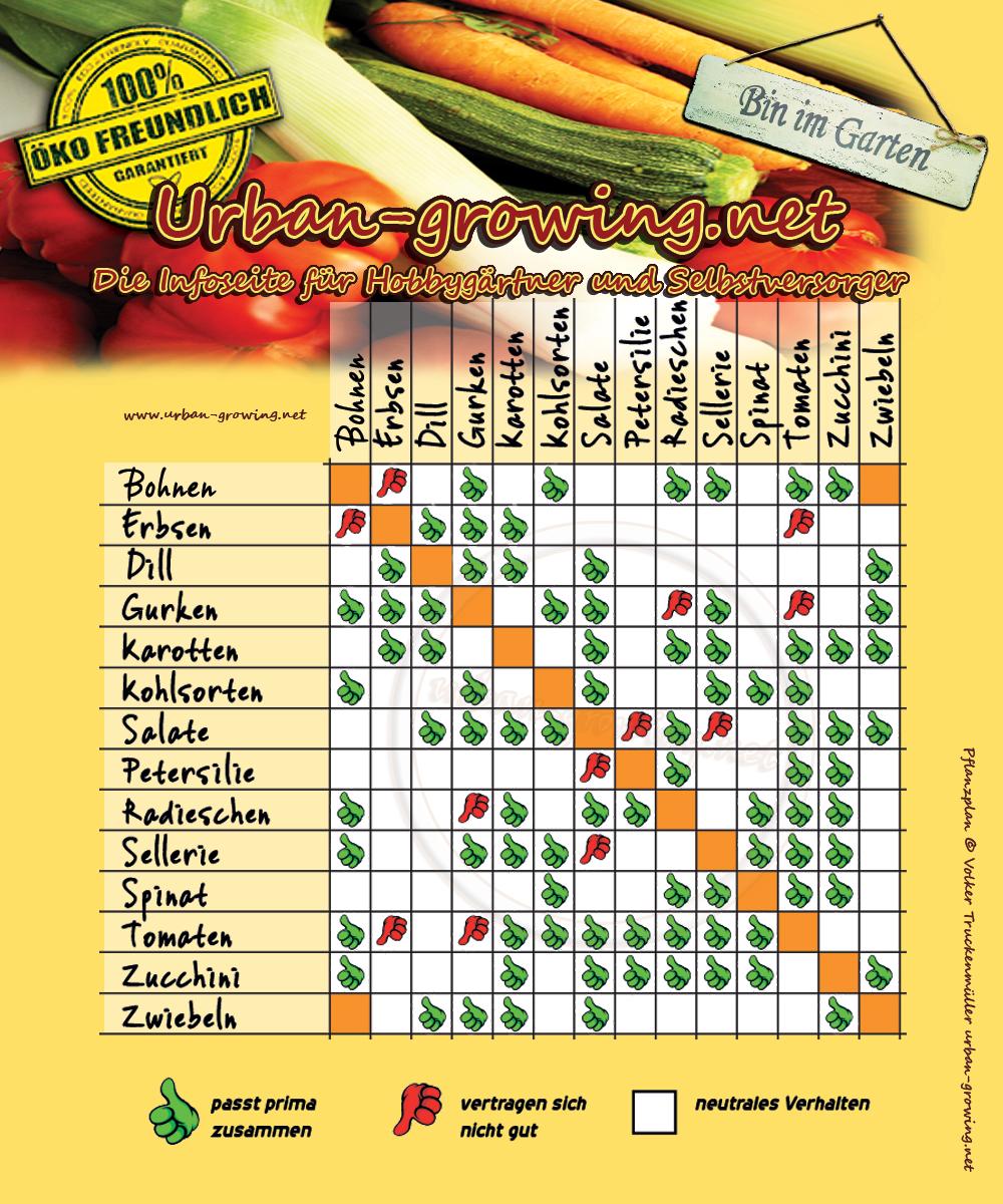 Pflanzplan welche Gemüsesorten vertragen sich miteinanderGartentipps