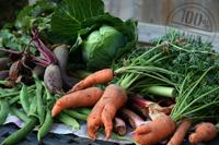 Bio Gemüse erntefrisch