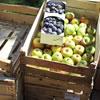 Apfelernte, Pflaumenernte