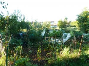 ein kleiner und feiner Hobbygarten