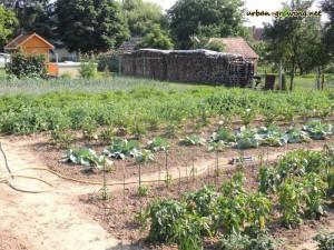 Bewässerung mit einem Rasensprenger