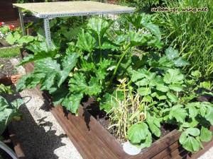 Hochbeet - www.urban-growing.net