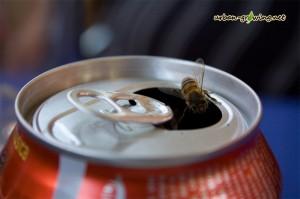 Bienen in einer Coladose