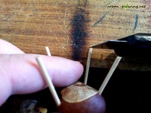 Mit einem scharfen Messer werden die Beine gleichmäßig gekürzt - www.urban-growing.net