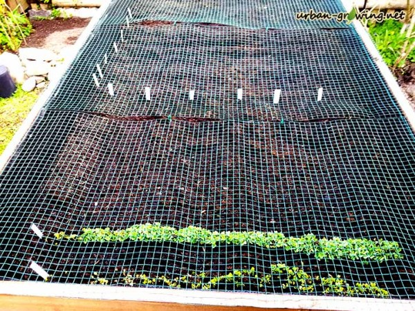 Hochbeet anpflanzen leicht gemacht - www.urban-growing.net