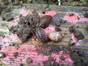 Schneckenfallen selbst gemacht - www.urban-growing.net