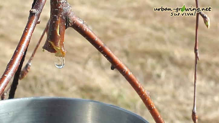 Baumwasser Baumwasserhahn, www.urban-growing.net copyright Volker Truckenmüller