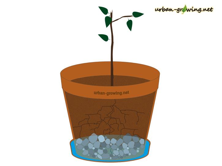 So wird ein Pflanzkübel richtig bepflanzt