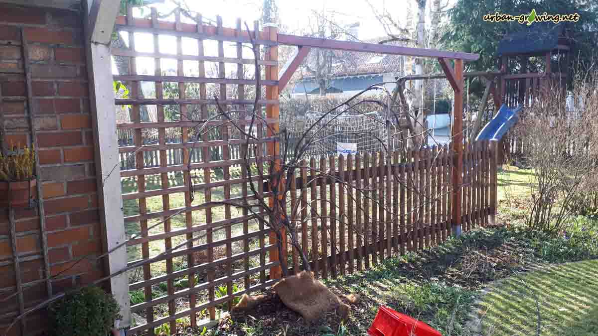 Zaun selber bauen, Zaunbau selbst gemacht, www.urban-growing.net, copyright Volker Truckenmüller